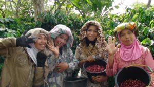 Femmes de la coopérative Ketiara récoltant du café