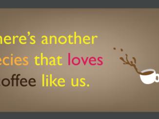 Les abeilles sont des accros du café de la nature