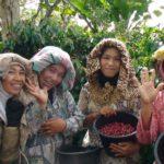 Rapport de dégustation de café: cafés Sumatra