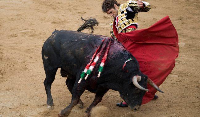 <pre><pre>José Tomás, le philosophe torero devenu légende