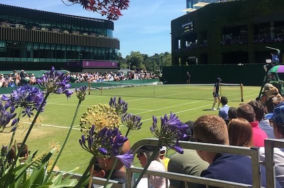 champs de Wimbledon
