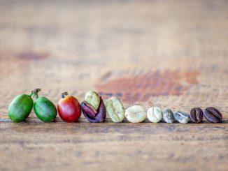 Café: le chemin de la plantation à votre tasse