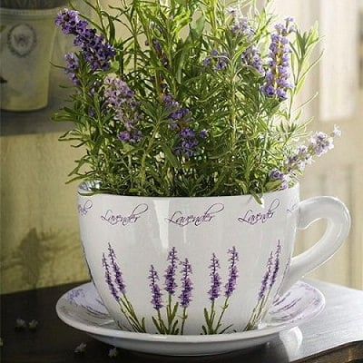 "Grow-Lavender-in-a-Tea-Cup-Planter_mini ""width ="" 400 ""height ="" 400 ""srcset ="" https://balcongardenweb-lhnfx0beomqvnhspx.netdna-ssl.com/wp-content/uploads/2015/10 /Grow-Lavender-in-a-Tea-Cup-Planter_mini.jpg 400w, https://balcongardenweb-lhnfx0beomqvnhspx.netdna-ssl.com/wp-content/uploads/2015/10/Grow-Lavender-in-a- Tea-Cup-Planter_mini-150x150.jpg 150w, https://balcongardenweb-lhnfx0beomqvnhspx.netdna-ssl.com/wp-content/uploads/2015/10/Grow-Lavender-in-a-Tea-Cup-Planter_mini-300x300 .jpg 300w ""tailles ="" (largeur max: 400px) 100vw, 400px ""/></picture></noscript><span class="