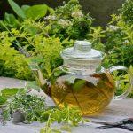 19 meilleures herbes à thé pour faire un jardin d'herbes à thé