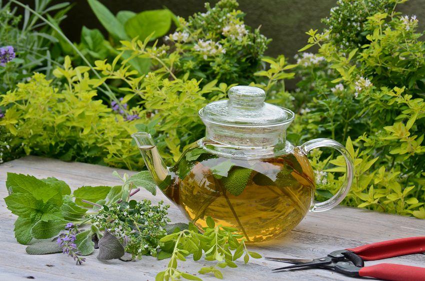 thé aux herbes_mini