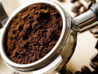 Florence: la ferme produit des légumes, des champignons et des vers de terre à partir de marc de café