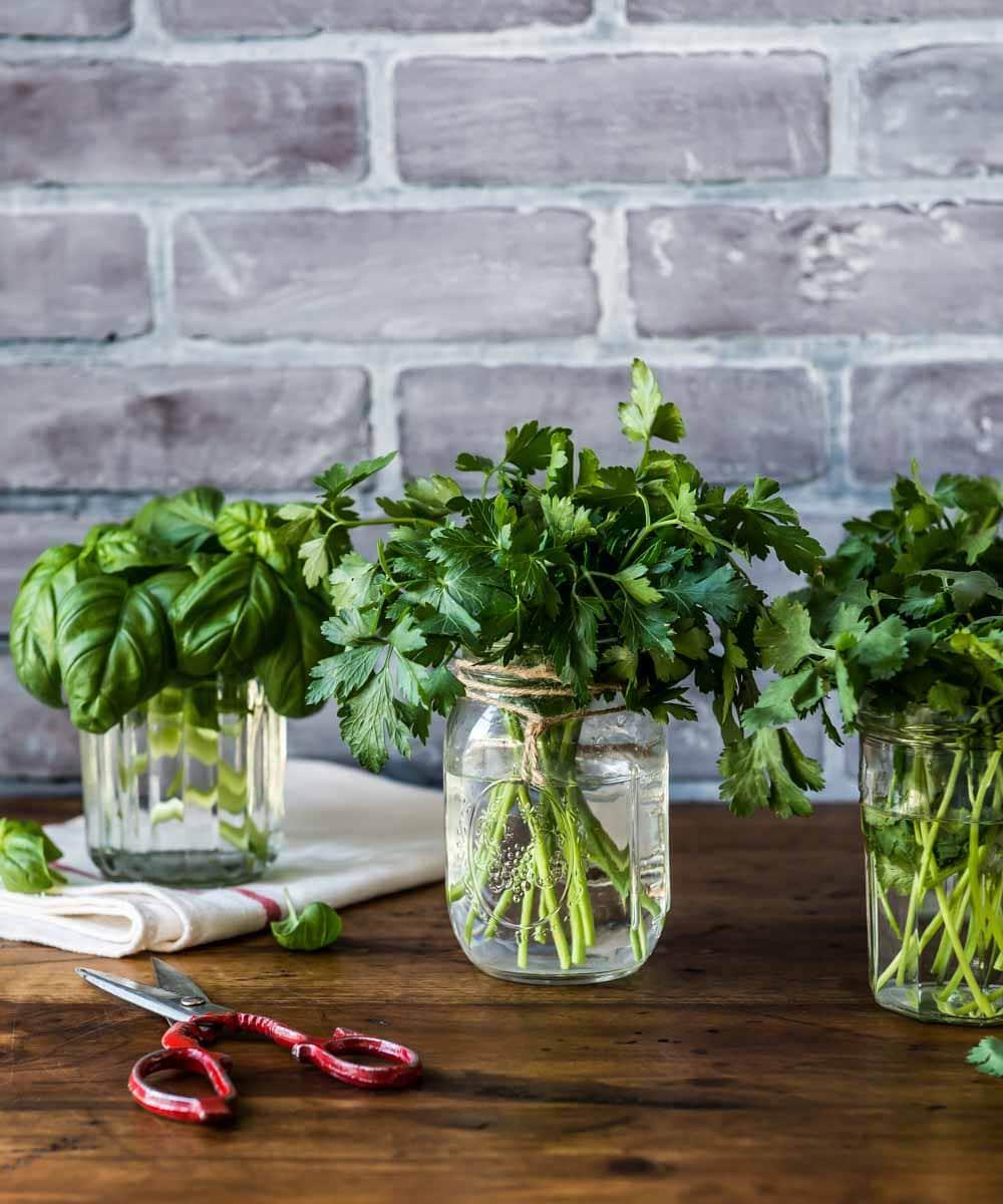 de beaux bouquets d'herbes dans des pots Mason prêts à être utilisés dans le meilleur thé détox. ces herbes peuvent également être utilisées dans le thé de désintoxication pour perdre du poids